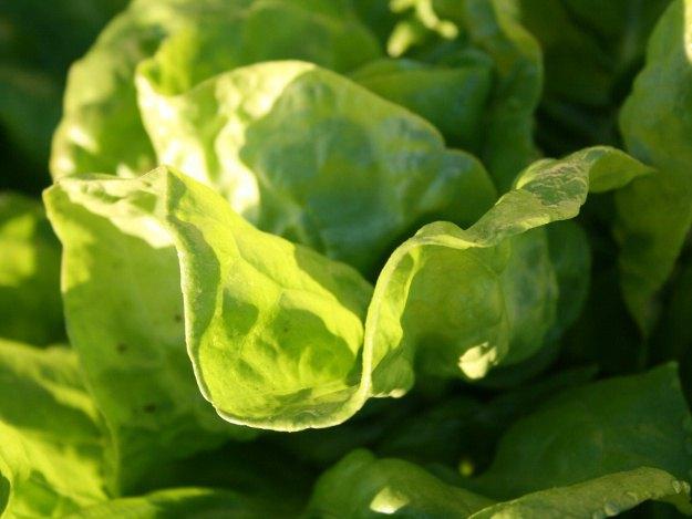 Salate ? Knackfrisch Und Voller Vitamine Frische Salate Eigenen Garten Ernten