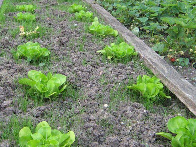 tipps für gesundes gärtnern,